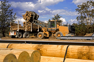 Govt Acts On TimberShortage